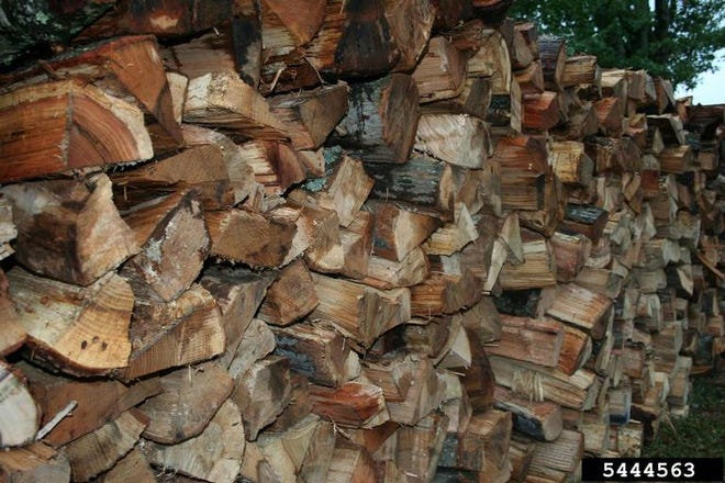 Bringing firewood from out of state is a bad idea, since it can hide bugs and other predators.