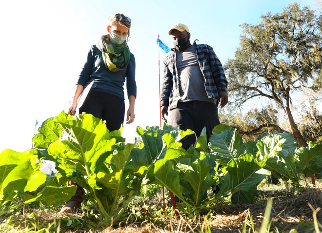 Melissa DeSa, left, the community programs director at Working Food, talks with Lennon Fisher, a fifth-generation farmer from Jonesville, about some of the unique varieties of collards being grown at the University of Florida Field and Fork Garden, as part of the Heirloom Collard Project, on Dec. 8 in Gainesville. [Brad McClenny/The Gainesville Sun]