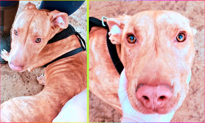 A dog available for adoption at St. Clair County Animal Control.