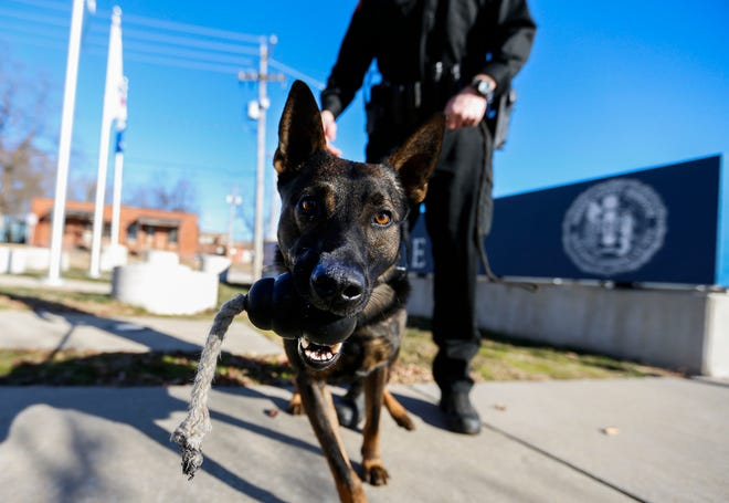 Greene County Sheriff's K9 Rocky outside the Greene County Emergency Operations Center on Dec. 9.