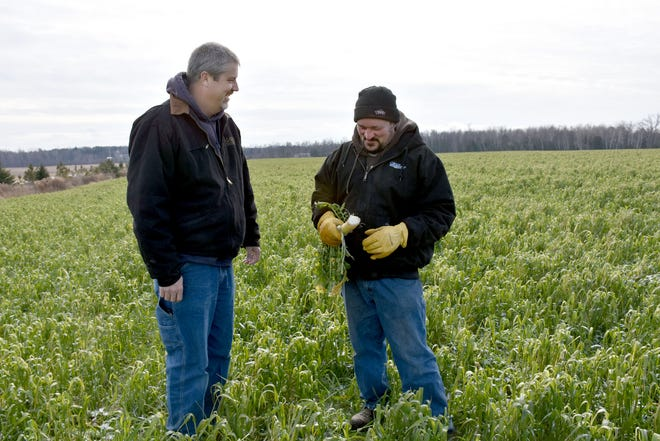 Barry Bubolz, left, NRCS Area Great Lakes Restoration Initiative Coordinator, with Derek Ducat, on a field planted with barley, winter rye and radish. The field is planned to go into no-till alfalfa.