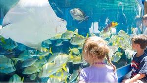 St. Augustine's Aquarium