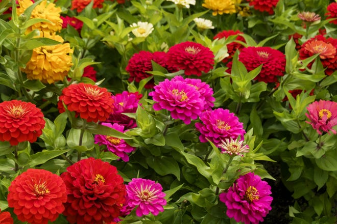 Try All-America Selection's picks for a garden full of big, beautiful blooms and visual appeal.