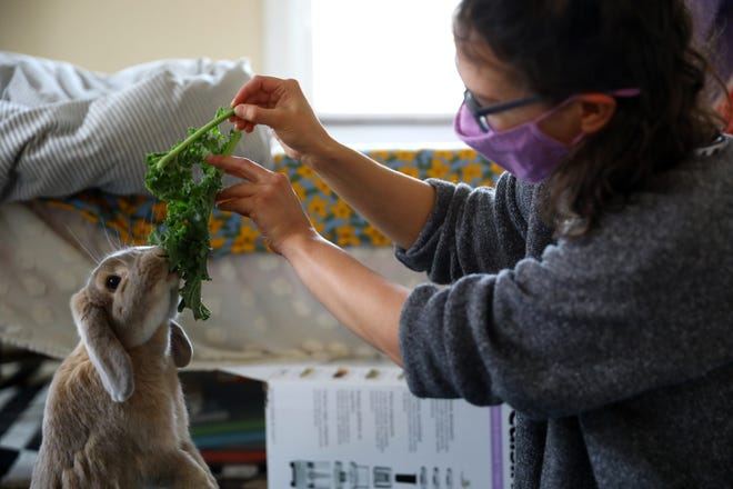 Sunny Wilson and her lop-eared rabbit, Edna, spend time together in her bedroom, Tuesday, Dec. 15, 2020. Wilson, who lives alone in a second-floor apartment, decided on Edna as a companion at the start of the pandemic. She used to be the gallery director at Visionaries & Voices, but is now studying Occupational Therapy at Cincinnati State.