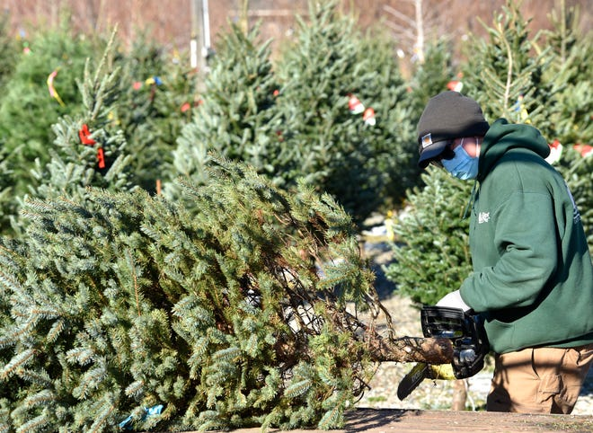 Even after Christmas is over, there are things you can do with your Christmas tree such as burning it as firewood, turning it into mulch and cutting off the branches to layer on top of plants.