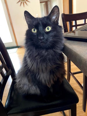 Onyx is one of three pets who help Tammy Szczesny of Manitowoc while she works at home doing data synchronization for a food company.