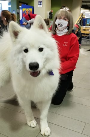 """Brynn the Samoyed and owner Vicki Depies of Random Lake are a Pets Helping People team and recently met students at Concordia University for a pre-exam week """"stress relief"""" visit."""