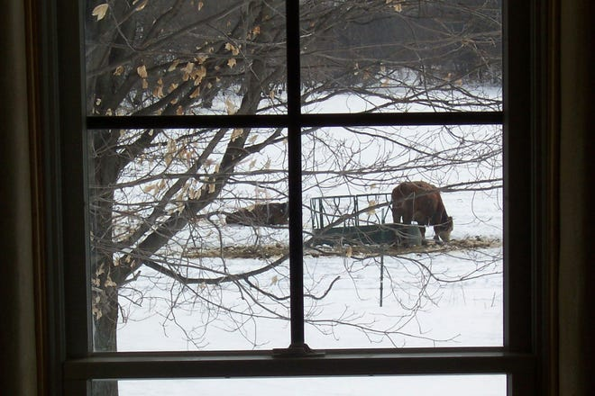 As busy holidays approach take time to enjoy the view from your own window.