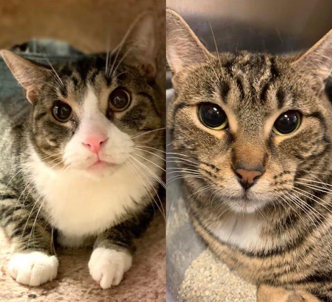 New Cat-matics: 2 kitties = twice the fun + infinite times the love