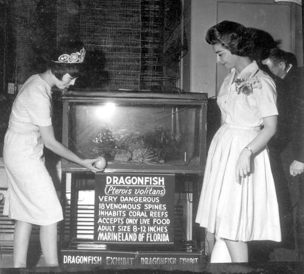 Citrus Queen Sue Scarbrough and June Murphy check out the dragonfish at Marineland Aquarium in 1963.
