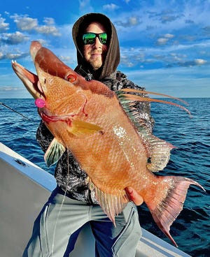 Griffin Deans of Palmetto caught this hogfish on a live shrimp while fishing nearshore in 45 feet of water off Tampa Bay with Capt. John Gunter of Off The Hook Charters this week.