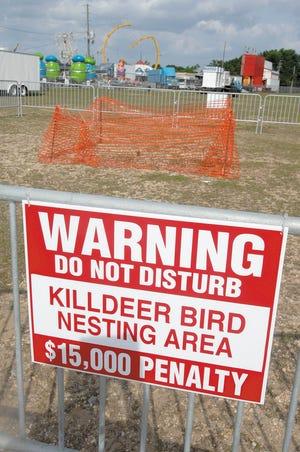 El nido asesino cerca del sitio del Old Spanish Trail Festival en 2009, lo que obligó a los organizadores a adaptarse al nido.