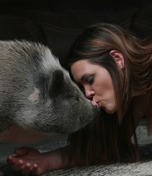 Canal Winchester resident Courtney Elliott kisses the snout of Charlotte, a Juliana pig. Elliott tried to get the city of Canal Winchester to allow her to keep Charlotte as an emotional-support animal. Elliott and her husband sold theirSarwilDrive South residence in July.