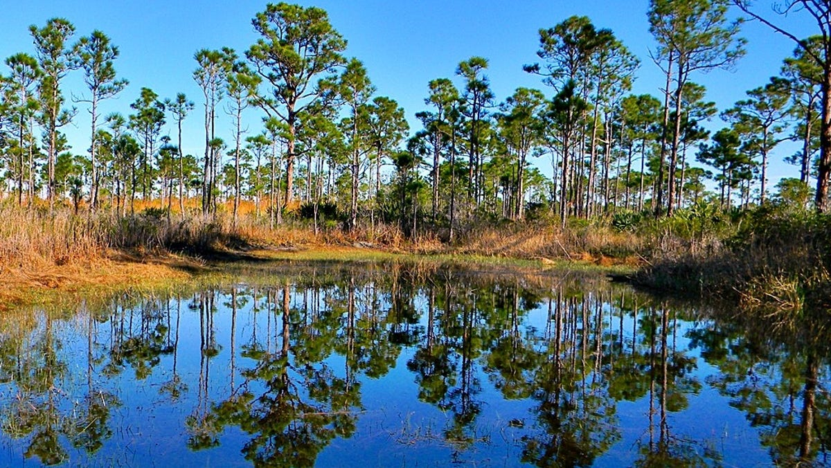 Earthjustice lawsuit aims to return federal oversight for Florida wetlands permits 1
