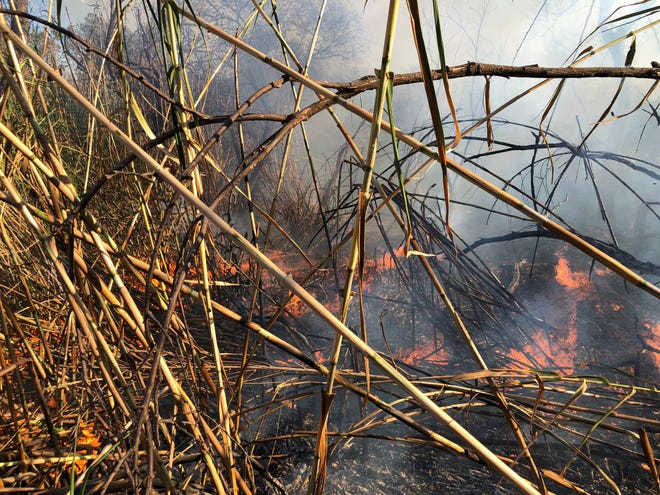 This was the scene of a vegetation fire burning in the Santa Clara River bottom near the Johnson Drive exit in Ventura on Thursday afternoon.