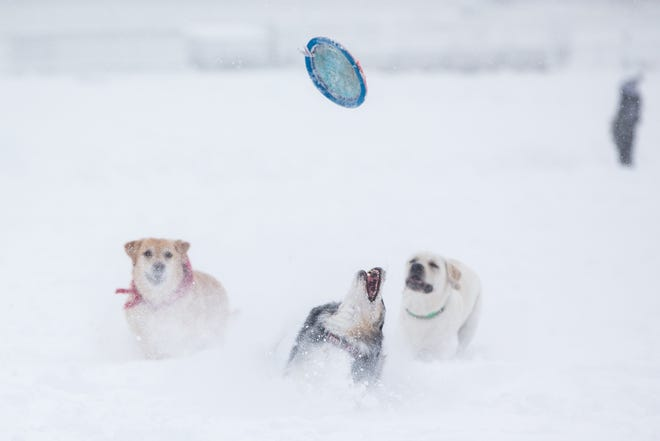 Dogs play with a frisbee in near white-out conditions on the Boston Common on December 17, 2020 in Boston, Massachusetts.