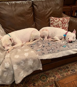 Meadow and Chloe share the couch. Both were adopted from the Aiken County Animal Shelter.