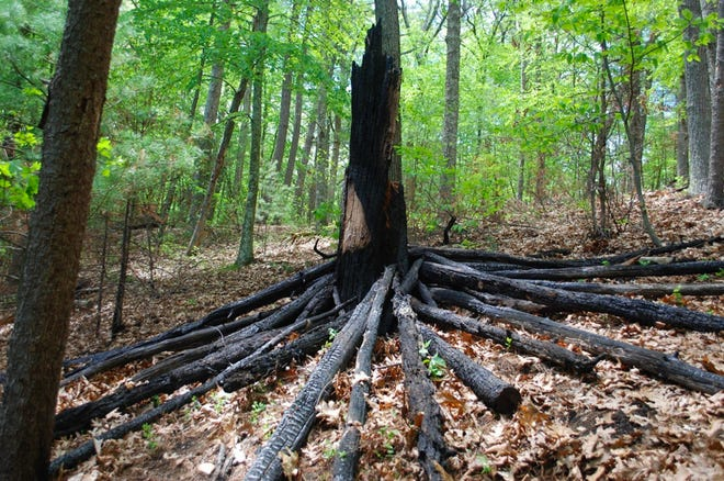 """""""The lightness which puts out our eyes is darkness to us. Only that day dawns to which we are awake."""" Henry David Thoreau (found burned logs and tree trunk)"""