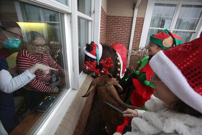 """Diane Steimel and her occupational therapy assistant Lauren O'Leary are visited at Steimel's window at Aultman Woodlawn by elves Kari Lawson and her daughter, Kayla Lawson, along with their """"reindeer"""" - Chase, a goat, and Buddy, a pony - Friday afternoon. Kari Lawson is a physical therapist at the rehabilitation facility."""