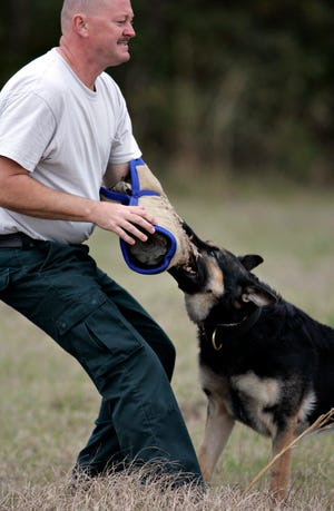 An Alachua County sheriff's sergeant works to train K9 Dano in this Sun file photo from 2005.