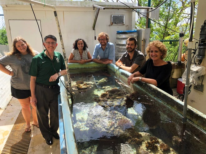 The University of Guam's Marine Lab is marking its 50th year. From left: Victoria Moscato, graduate research assistant; Thomas W. Krise, president of University of Guam; Sarah Lemer, assistant professor of marine invertebrate genomics; David Combosch, associate professor of population genetics; Andrew McInnis, graduate student; and Laurie J. Raymundo, interim director of the marine lab are shown in this September 2018 file photo.