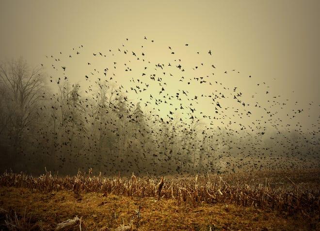 """""""Birds!"""" by New Castle photographer Mark Sean Orr"""