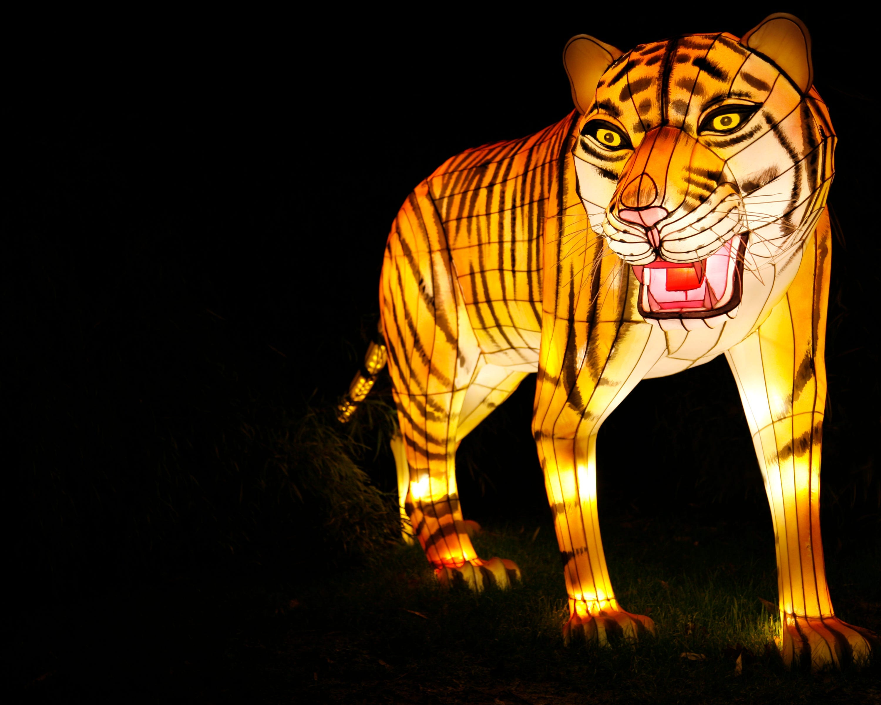 These are the best zoo holiday light displays, according to readers