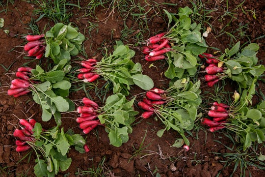 Radishes can be seen in piles at Simple Promise Farms in Elgin, Texas on Friday, Nov. 13, 2020