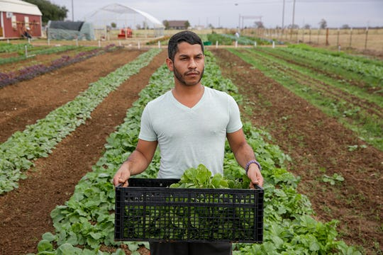"Pablo Quintero, 29, stands for a portrait while picking radishes at Simple Promise Farms in Elgin, Texas on Friday, Nov. 13, 2020. This is the first time he has been sober in 12 years. Before joining the program he left an abusive relationship that put him in the hospital twice. ""He broke my heart and he broke my nose,"" Quintero said. ""I knew I needed to change, once I got out of the hospital I packed everything I owned and moved to Austin."" Quintero has been a resident at Simple Promise Farms and Ranch House Recovery for over a month."