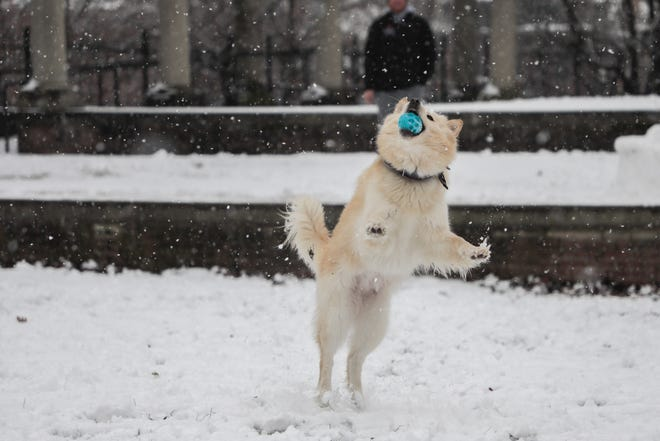 A snow-covered Schiller Park earlier this winter was the perfect place to play fetch for Kaia, a Pomeranian-husky mix belonging to Dustin Dawson.