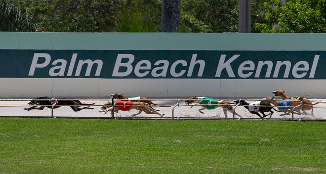 There will be no more greyhound racing at Palm Beach Kennel Club after Dec. 31, but there will be plenty of action between now and the end of the year.