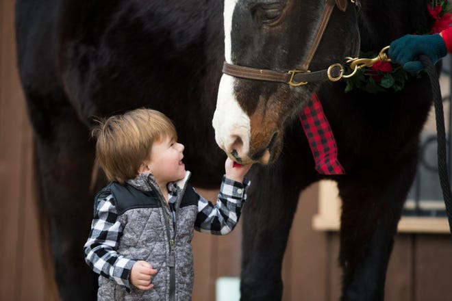 Easton Roth-Bulliner, 2, of Rockford, pets Ben, an Arabian horse, and poses for pictures during the Holiday Horse event at Lockwood Park Equestrian Center on Saturday, Dec. 19, 2020, in Rockford.