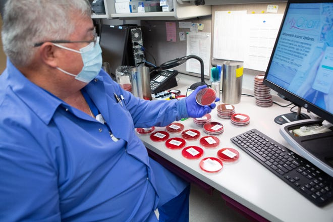Labeling blood cultures, Mark Neuer, medical technologist for Stormont Vail Health, says this isn't the most exciting part of his job Friday afternoon in the basement of Stormont Vail, 1500 S.W. 10th Ave. Neuer has been employed at the hospital for 40 years and has been working behind the scenes of the COVID-19 pandemic.