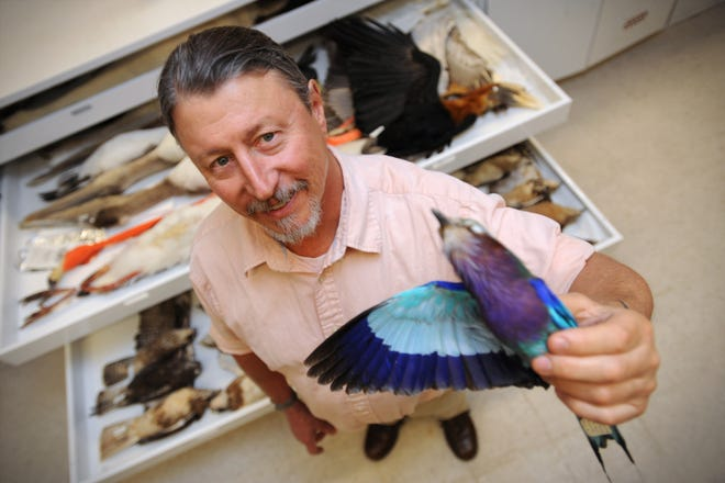 New Mexico State University biology Professor Peter Houde holds up a specimen related to the birds that he and three graduate students studied as part of an international collaboration sequencing the DNA of all major groups of birds.