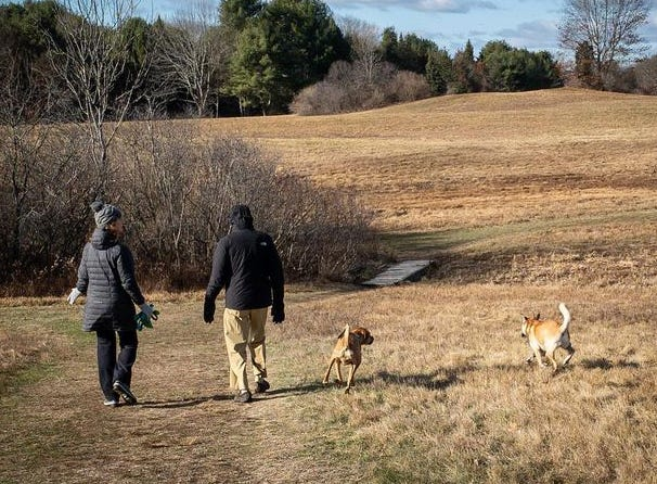 Stefanie Griffin and her father Jim Griffin, both of Durham, enjoy the trails at Wagon Hill Farm with dogs during off-leash hours over Thanksgiving weekend.