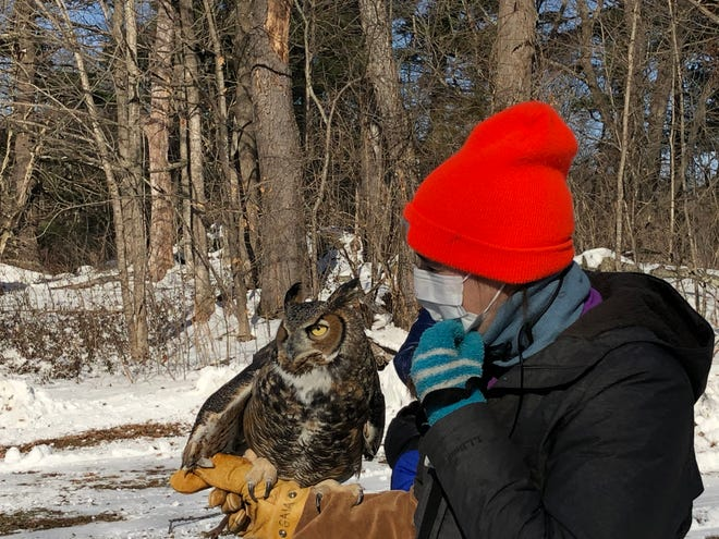 Gaia, a Great Horned Owl, visited the Word Barn Meadow as part of its Owl Prowl event on Saturday, Dec. 19.