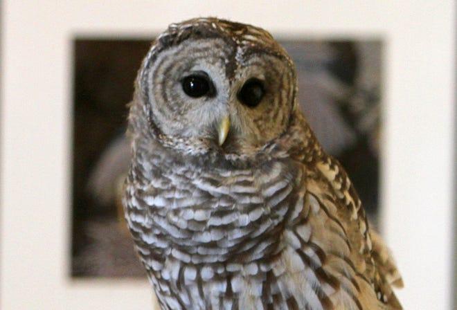 The Audubon Nature Center and Aquarium, Bristol, will have vacation week programs.