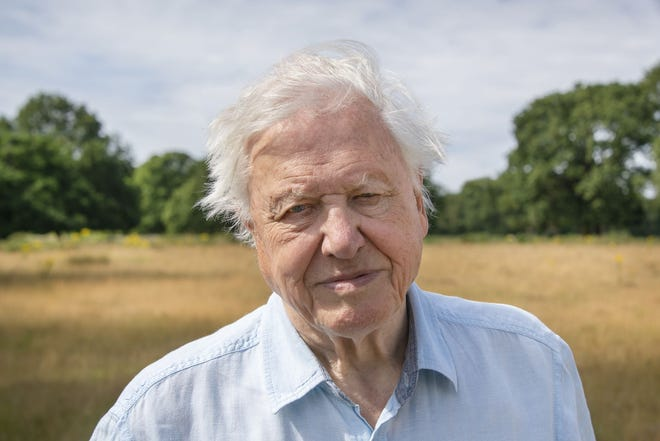 """David Attenborough narrates """"A Perfect Planet,"""" which celebrates the harmony of the natural world and warns of human disruption to this delicate ecosystem."""