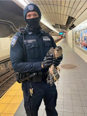 Port Authority Police Officer Jordan Gonzalez with Rico the hawk, whom he saved from a PATH station in Jersey City on Monday.
