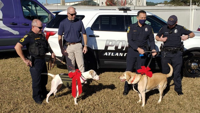 Jamie (left), the new Jacksonville Beach Police service dog, eyes Atlantic Beach police service dog C4 (right) at this week's donation ceremony with their new owners on hand.