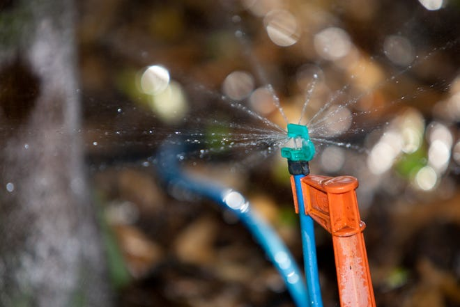 A micro-irrigation system puts water only where it's needed.