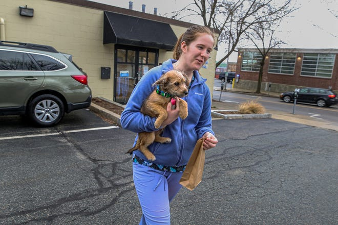 Providence River Animal Hospital technician Audrey Perkins returns border terrier mix Shamus to his owner, Sam Glicksman of Pawtucket, after a checkup in March.