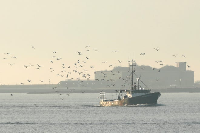 A fishing boat is followed by a colony of seagulls as it passes Fort Rodman in the distance on its way into New Bedford Harbor.