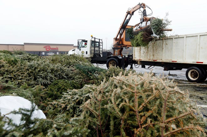 Employees from Tuscaloosa Environmental Services pick up used Christmas trees in this  Jan. 12, 2015, file photo. [Staff file photo]
