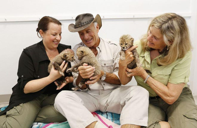 In this May 2018 photo, Jack and Suzi Hanna and their youngest daughter, Julie, hold a trio of 3-week-old baby cheetahs rescued from the Fossil Rim Wildlife Center. Julie Hanna works in the zoo's animal-programs department.