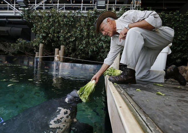 Jack Hanna feeds manatees at the Columbus Zoo and Aquarium on May 29, 2018.