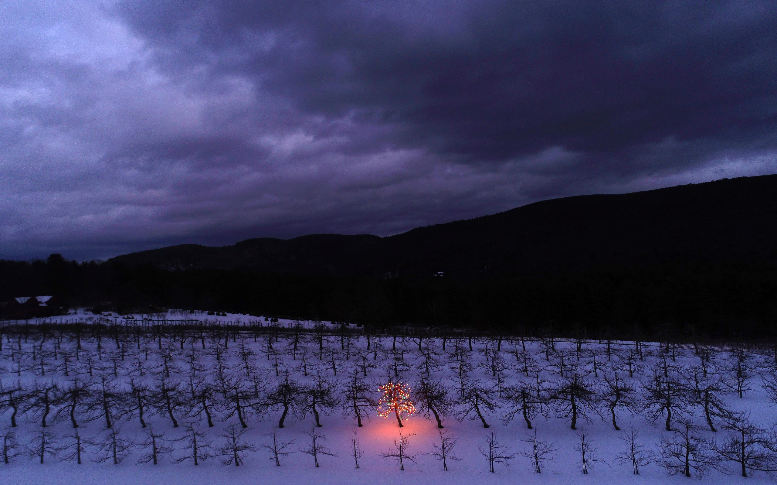 A lone apple tree is lit up in Christmas lights at Windy Hill Farm in Great Barrington, Mass. Tuesday, Dec. 22, 2020.