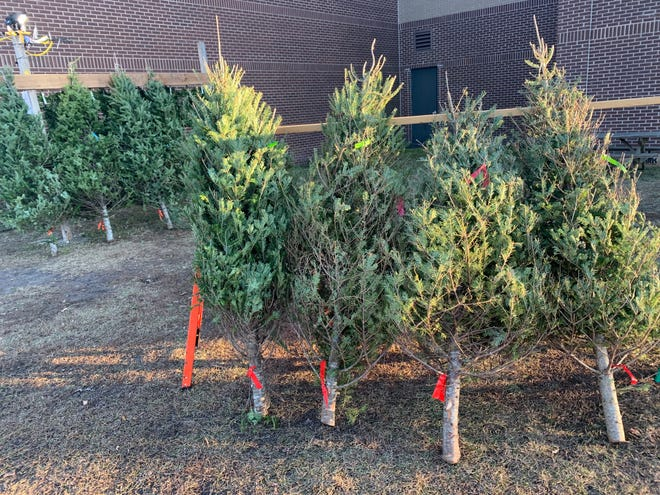 Pender County residents can dispose of their  Christmas trees through Jan. 16, 2021.