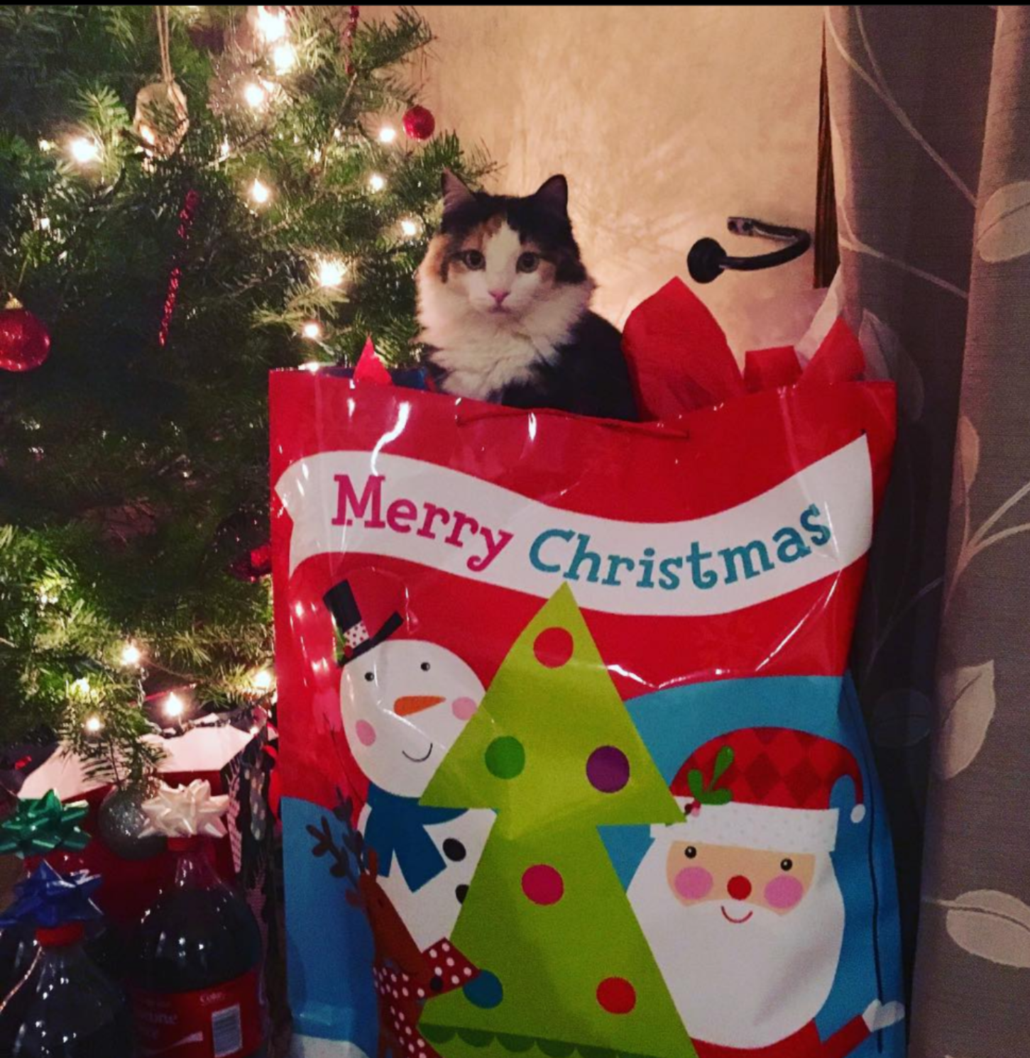 Iowa cat home for Christmas after being lost for nearly 5 years