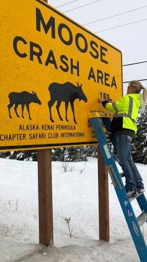 """Laurie Speakman, """"The Moose Lady,"""" menghabiskan delapan tahun terakhir mengumpulkan rusa kutub untuk amal lokal Alaska."""
